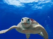 loggerhead-turtle-sea-ocean-water-68744.jpeg